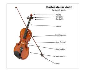Desglose de las partes de un violin una a una